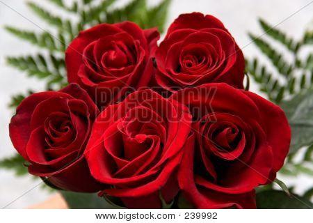 Flowers Rose 10
