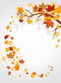 stock photo of fall leaves  - Autumn leaves swirl with space for text - JPG
