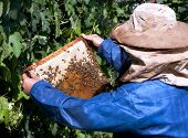picture of bee keeping  - A beekeeper  - JPG