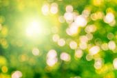 Blur Defocused Nature Blurred Or Bokeh Circles Color Snow Glow Colorful Light Sparkling Under A Tree poster