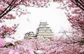 Himeji Castle With Frame Of While Cherrry Blossoms Viewing Festival, Kyoto Japan, This Immage Can Us poster