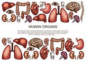Human Body Anatomy Sketch Poster Of Internal Organs Of Digestive, Respiratory And Vital System. Vect poster