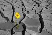 stock photo of life after death  - Lonely flower among cracks of soil after a heat - JPG