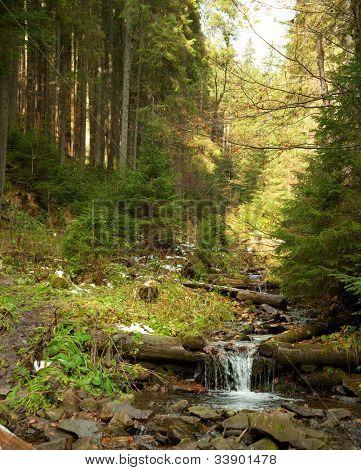 Woodland Stream.