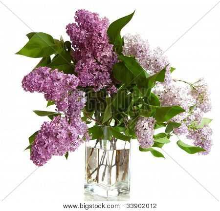 bouquet of spring purple Lilac in a vase isolated on a white background.