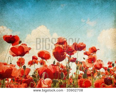 paper textures. Field of poppies