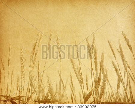 aged paper texture.  field of wheat.