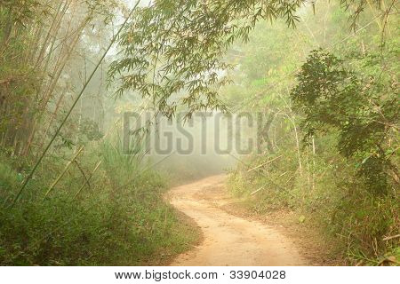 Misty morning. Ground road in jungle near Umphang. Tak Province in northwestern Thailand. January, the dry season