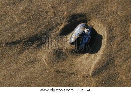 _mg_0108 Sea Shell