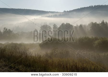 Morning fog on mountain forest