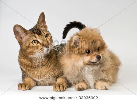 Cat and puppy  in studio