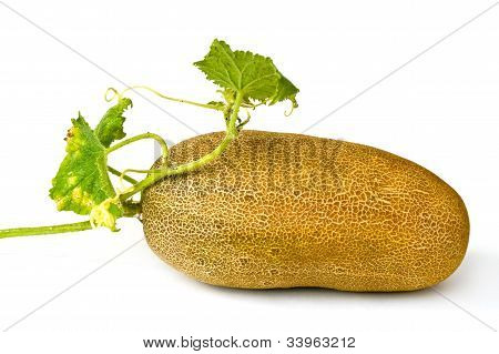 Cucumber On Seed