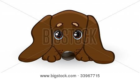 Sad Puppy Dachshund