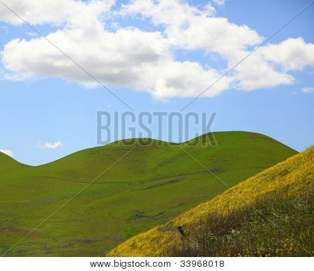 Rolling hills blue sky and mustard flowers