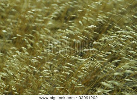 Detail pattern of high chaparrel grasses