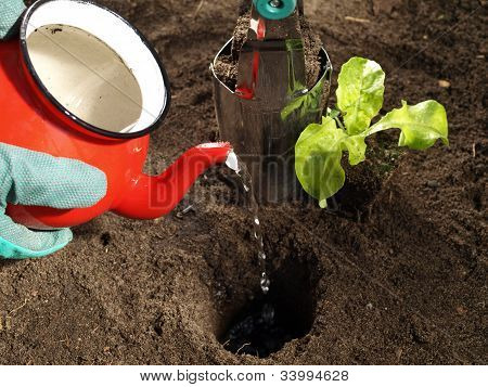 Watering And Planting