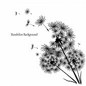 Beautiful Icon With Black Dandelion On White Background For Concept Design. Spring Floral Background poster