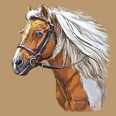 Colorful Horse Portrait With Bridle. Horse Head With Long Mane In Profile Isolated On Beige Backgrou poster