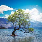 Square Image Of The Lonely Tree In Lake In Wanaka, New Zealand poster
