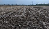 Dry Soil - Texture Of Dry Soil Or Cracked Soil In Summer, Plants Die From Drought poster