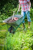 foto of humus  - gardener with a wheelbarrow full of humus in the garden - JPG