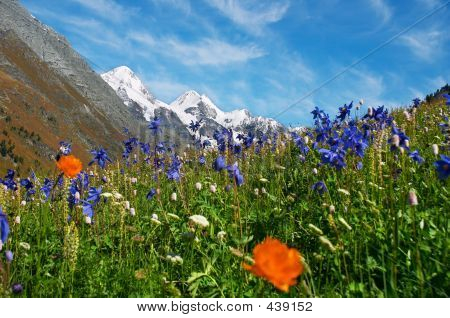 Beautiful Flowers And Mountains.