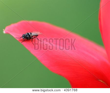 Fly On Red