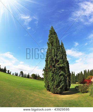 Romantic Landscape Park - garden in Italy. Lone Cypress. Photo taken fisheye lens