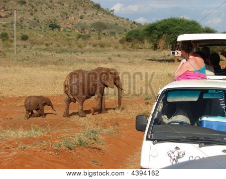 Safari For Tourists Admire The Wild Animals In The African Savanna