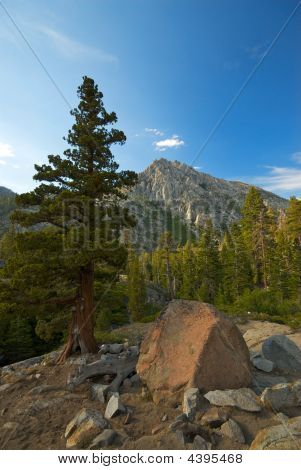 Bristlecone And Mountain