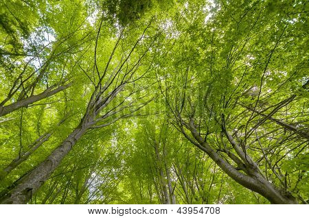 Trees Low Angle Shot