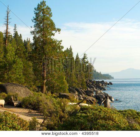 Chimney Trees