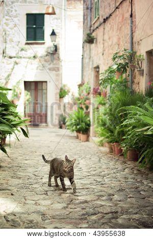Cat Walking Down The Street