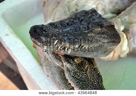 Skinned crocodile prepared for barbecuing