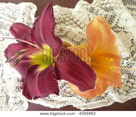 Wine Daylily And Orange Hibiscus