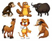 stock photo of platypus  - Illustration of the six different kinds of four - JPG