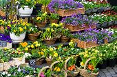 stock photo of flower shop  - flowers in a flower shop on a street - JPG