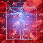 stock photo of skeleton  - Health care research medical concept with a Vitruvian human skeleton man and body with a group of floating red blood cells circulating in a vein - JPG