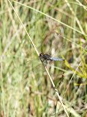 Dragonfly Near River