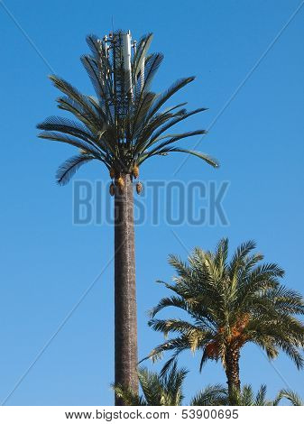 Plastic Palm Tree