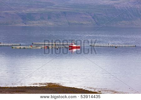 Iceland Fishing Boat And Nets In West Fjords Water