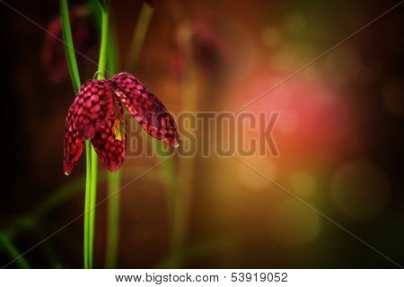 Beautiful flower on colorful  background