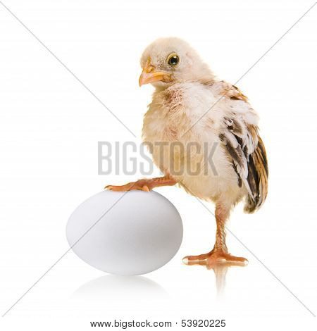 Chick And Egg