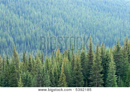Mountain Trees Landscape