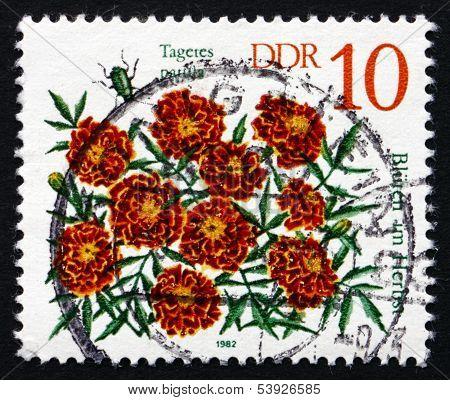 Postage Stamp Gdr 1982 Student Flowers, Autumn Flower