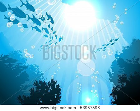 Oceanic fishes against the sun