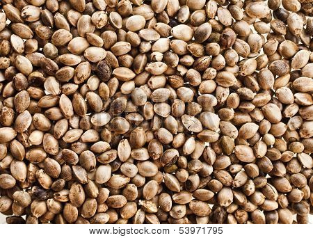 Cannabis Hemp seeds close up surface top view background