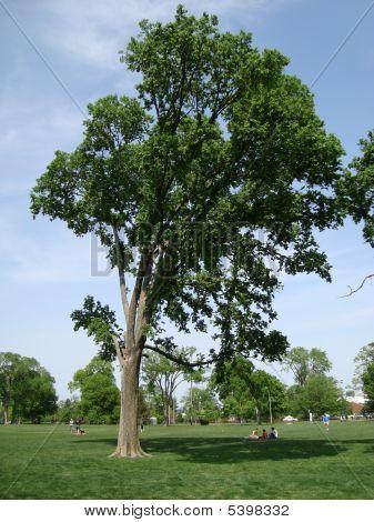 Nature-tree