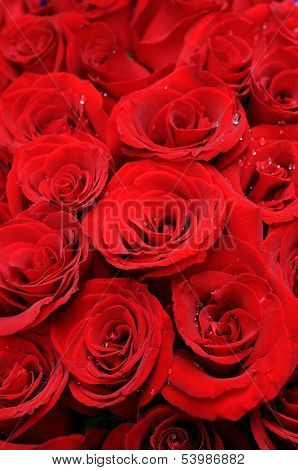 Background of beautiful red roses