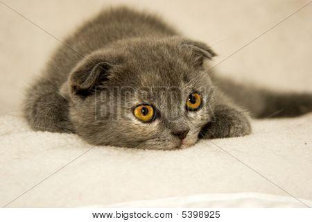 Kitten With Emerald Eyes